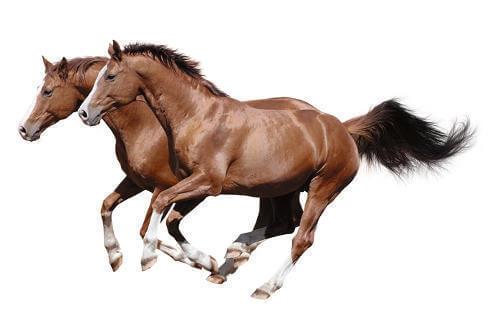 Profilová fotka Spolek chovatelů koní Chrudimska